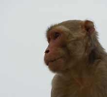 Strong Monkey security by BhakteesYogis