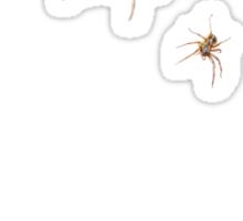 Arachnid Invasion Sticker