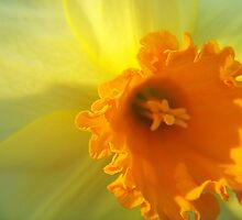 Yellow Like The Sun by James Brotherton
