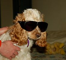 ray charles cocker spaniel by Bill Manocchio