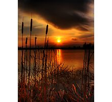 bullrush Sunset Photographic Print
