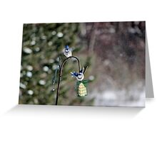 Birds in Motion X Greeting Card