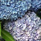 Beautiful Blue by DiEtte Henderson