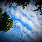 Bayview Clouds by aax13110
