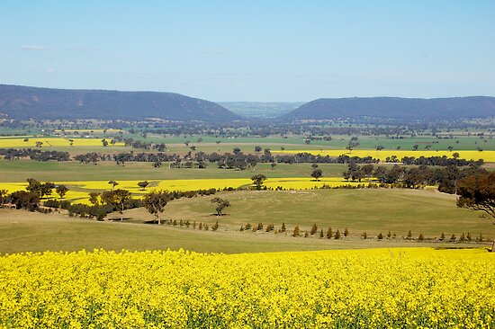 acres of gold by geoffgrattan
