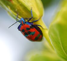 Beetle on Flower 2 by sarahncraig