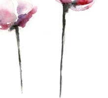 Pink tulips watercolor art print painting Sticker