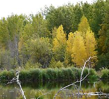 Fall Beaver Pond   by MaeBelle
