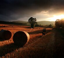 Reprise by colin campbell