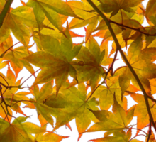 Under the Japanese Maple - Impressions Of Fall Sticker