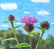 Thistle - mock watercolour by Stevie B