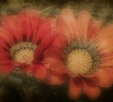 Gazania Diffusion by Elaine Teague