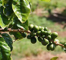 Fresh Coffee Anyone? by Teresa Zieba