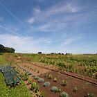 Sauvie Island Farm by Ryan Nowell
