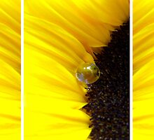Sunflower Tryptichon by TriciaDanby