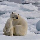 Polar Bear Cub &amp; Mum by Steve Bulford