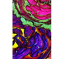ROSE GARDEN Photographic Print