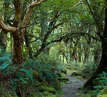 primeval forest on kepler track by peterwey