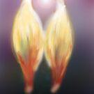 Twin Flame by Arie van der Wijst