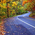 Autumn Drive On The Pig Trail by NatureGreeting Cards ccwri