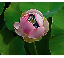 The Water Lily Photographic Print