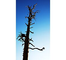 LONEY TREE Photographic Print