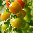 Cherry Tomatoes  by fixtape
