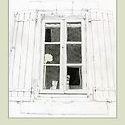 Cat in Window by mrana