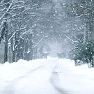Snow Falling on Road by Mary Ann Reilly