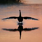 Landing Gear Down by Rosie Appleton