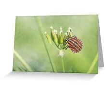 Red Bug - One More Bottle Does Not Hurt Greeting Card
