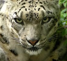 Intense Gaze by Lisa G. Putman