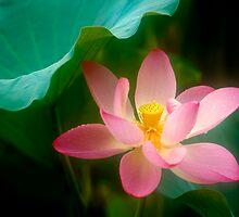 Lotus #47 by Janos Sison