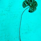 Four Leaf Clover #2 by Roz McQuillan