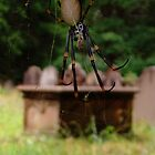Spider in the Cemetery by Cathi Norman