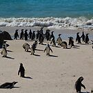 African Penguins by georgyman