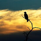 Silhoutte by Leon Rossouw
