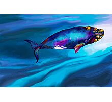 BowHead WHale Swimming Along Photographic Print
