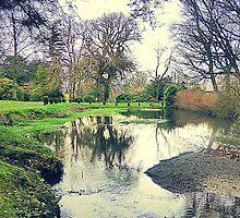 A Winter Garden..................................................N Ireland by Fara