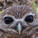 Burrowing Owl #10 by Virginia N. Fred