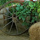 Wagon Wheel by CarolM