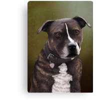 Stafforshire bull terrier 1 Canvas Print