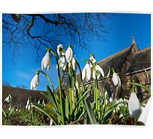 Snowdrops in the English church Poster