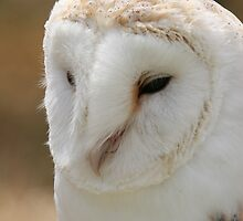 barn owl  by martinj27