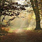 The way home by Graham Ettridge