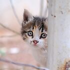 Syrian Street Kitten by travellingtwo