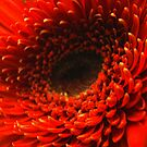 Seeing Red! by Susan Bergstrom