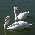 Swan duo by Bonnie Pelton