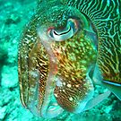 Neon Cuttlefish by Christopher Hamilton Lansell