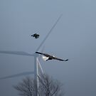 Wings - Bald Eagle and Windmills by Deb Fedeler